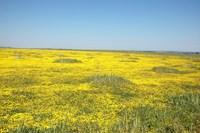 Namaqua Land.JPG