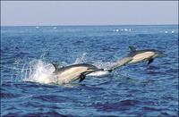 dolphines.jpg