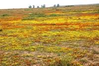 Namaqua Land2.JPG