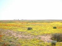 Namaqua Land4.JPG